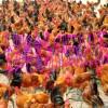 淮南土鸡孵化场供应土鸡公、母鉴别苗