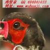 批发鸡眼镜、质量最好的鸡眼镜、厂家直销、量大从优!