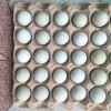 散养绿壳鸡蛋